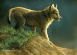 """Top of the Hill - Wolf Puppy, 5"""" x 7"""", watercolor on board, ©Rebecca Latham - The Snowgoose Gallery The Art of the Miniature XXIII"""