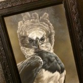 My painting, Commanding Stance - Harpy Eagle, on its way to Singapore for 2015's largest exhibition of wildlife art in Asia hosted by Mandala Fine Art @mandalafineart at Orchard Gateway