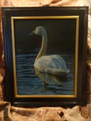 Opulent Glow - Trumpeter Swan, 11x14in, watercolor on board with sterling silver