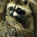 Curious Encounter - Raccoon, 6x8, watercolor on board with sterling silver, Rebecca Latham