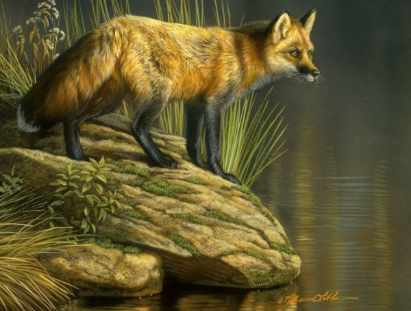 Peaceful Waters - Red Fox, 6x8, watercolor on board with sterling silver, Rebecca Latham