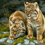 Bobcat Curiosity Rebecca Latham - Georgia Watercolor Society 2018 National Exhibition