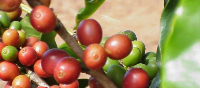 Brasilien ist mit großem Abstand der größte Kaffeeproduzent der Welt