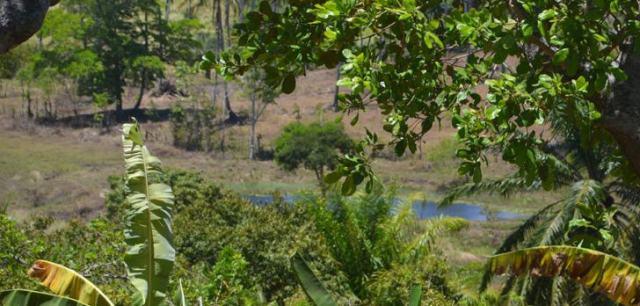 Nach offiziellen Daten sind die Rodungen im brasilianischen Amazonasgebiet von 27.772 km² pro Jahr im Jahr 2004 auf 4.848