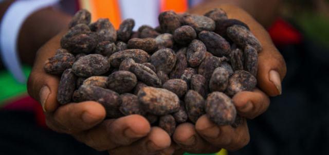 Der Kakao entwickelt sich mehr und mehr zu einem der wichtigsten Anbauprodukte Perus
