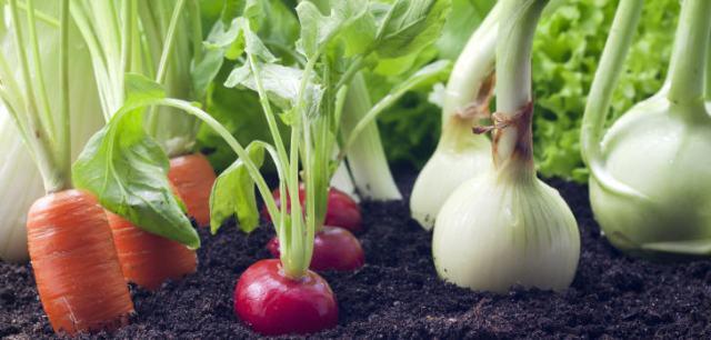 Hinsichtlich der Produktionsfläche für den ökologischen Landbau gab es im Jahr 2014 in den Ländern Lateinamerikas etwa 460.000 Erzeuger