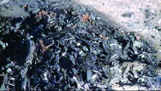 Dos misteriosos incendios ocurrieron en Santa Bárbara. / Two mysterious fires ocurred in SB last Friday/KEYT
