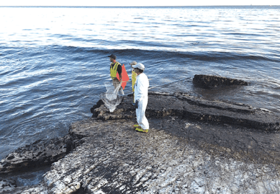 Petrolera culpable de derrame de petroleo Refugio / Plains All American  guilty on Refugio oil Spill