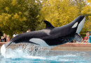 Parlamento canadiense veta ballenas en cautiverio