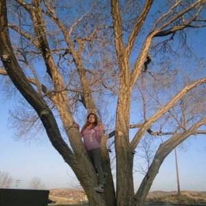 Alin Tree-1