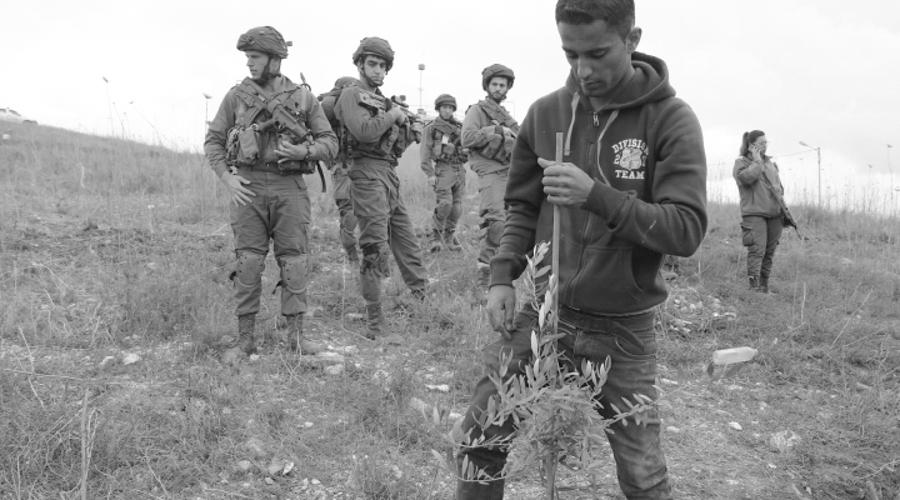Palestinos plantan árboles para desafiar la confiscación de tierras por parte de Israel