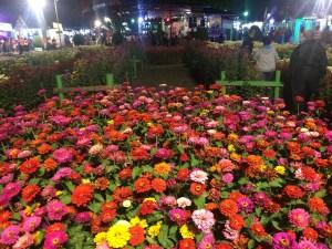 img_4645 Boquete Puts On a Show Boquete Panama Fairs and Festivals