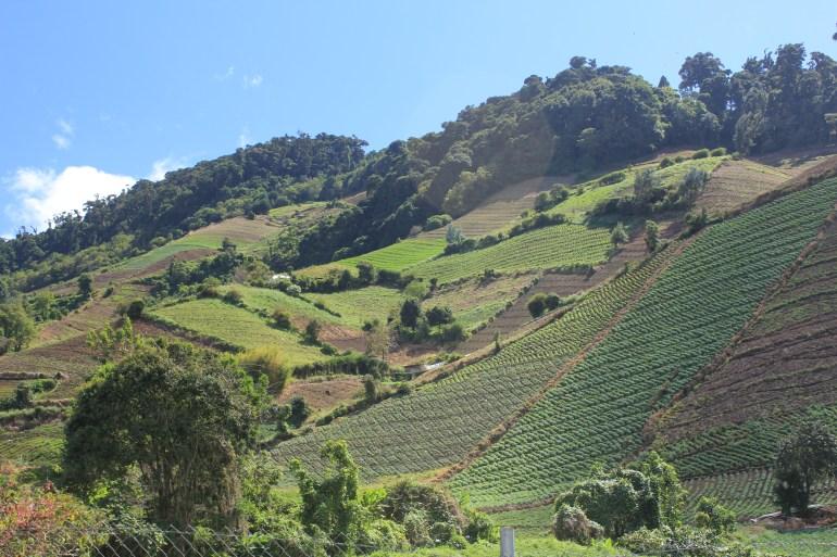 img_6778 Day Trippin' - Cerro Punta Panama The Expat Life
