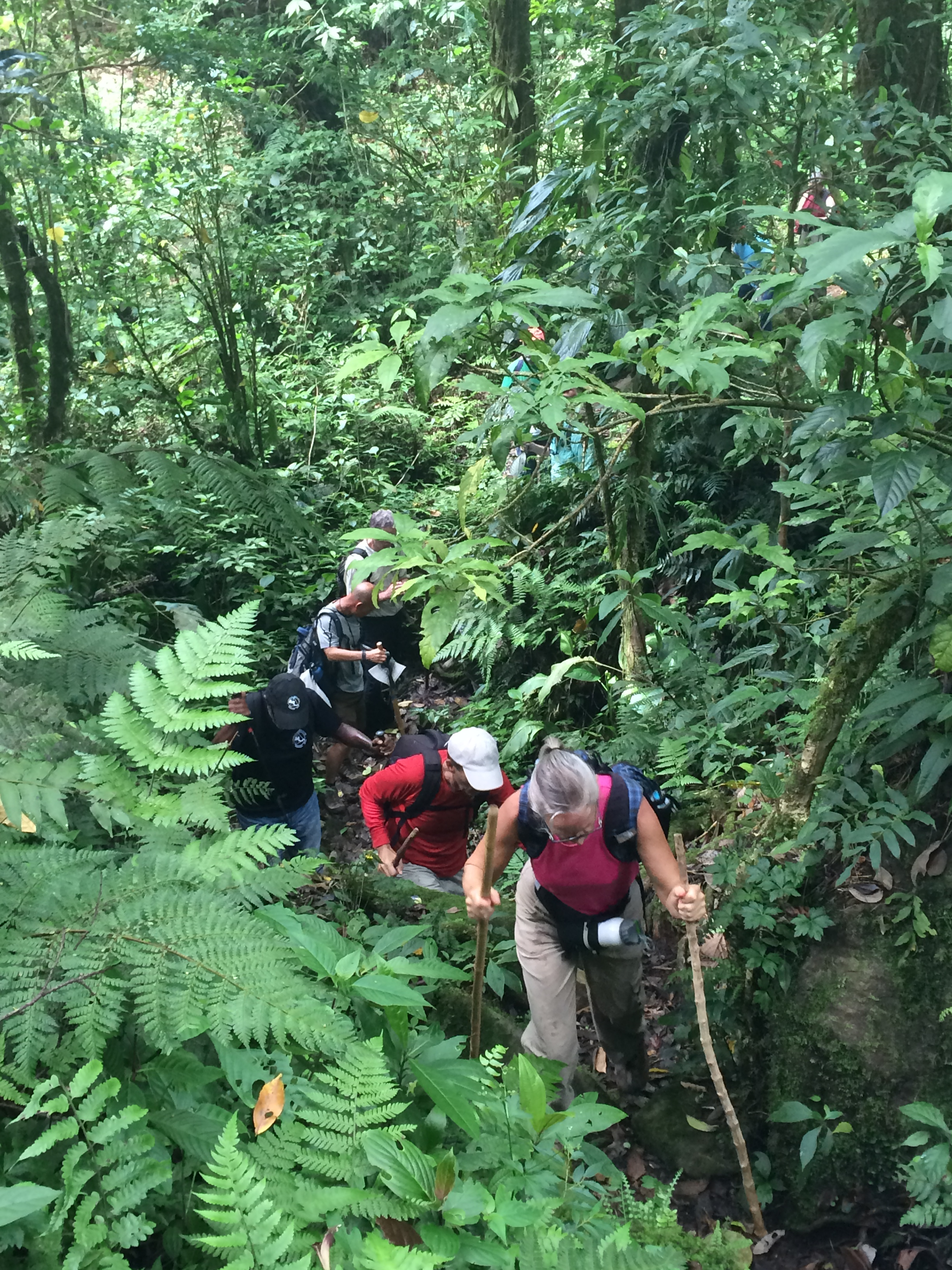 img_1483 Another Day, Another Adventure Hiking in Panama The Expat Life The Great Outdoors
