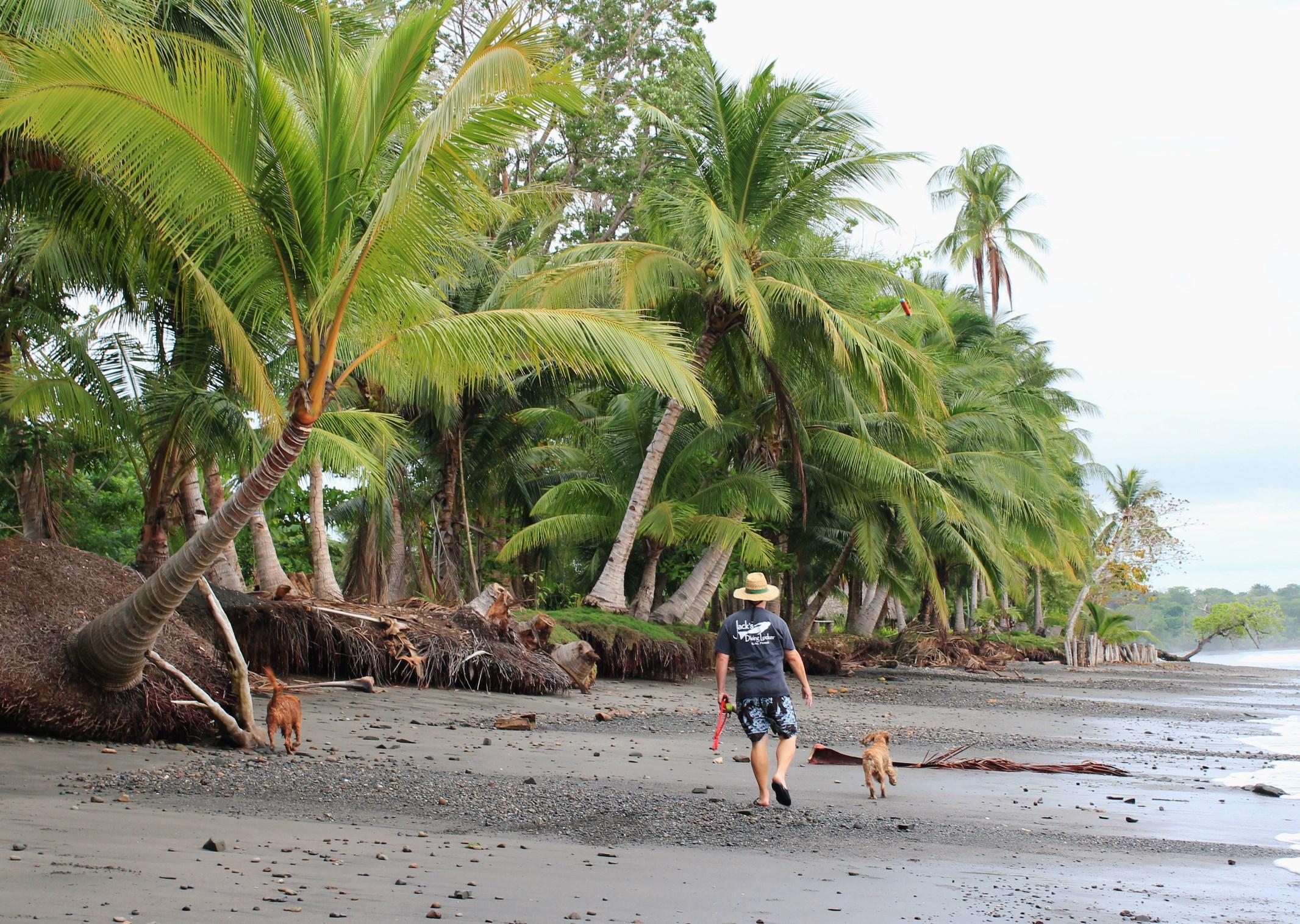 Hooked-on-Panama-Beach-3-1 Doggy Bliss at Hooked on Panama Panama Pets