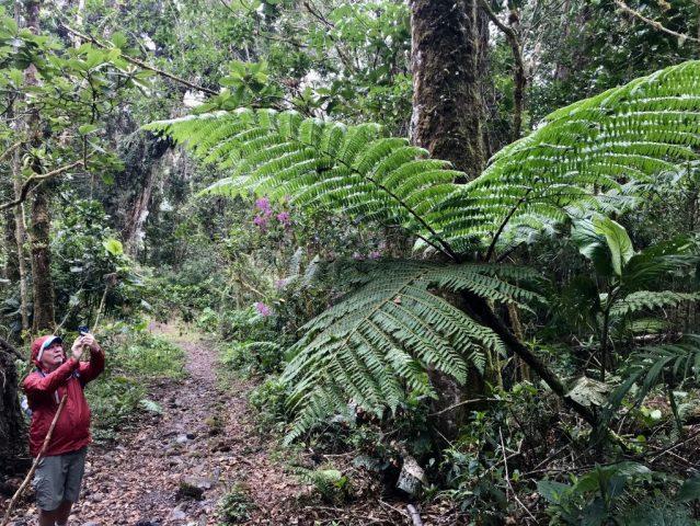 fullsizeoutput_af1-1024x768 Hiking Panama's Amistad National Park Hiking in Panama The Great Outdoors