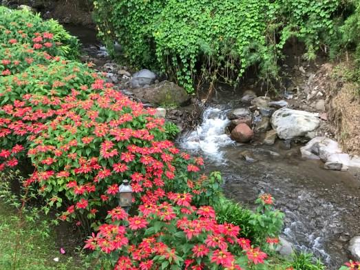 x3EDg71mTHOvsm3L8VF8Lg-1024x768 Panama's Sendero Los Quetzales Hiking in Panama Panama The Great Outdoors