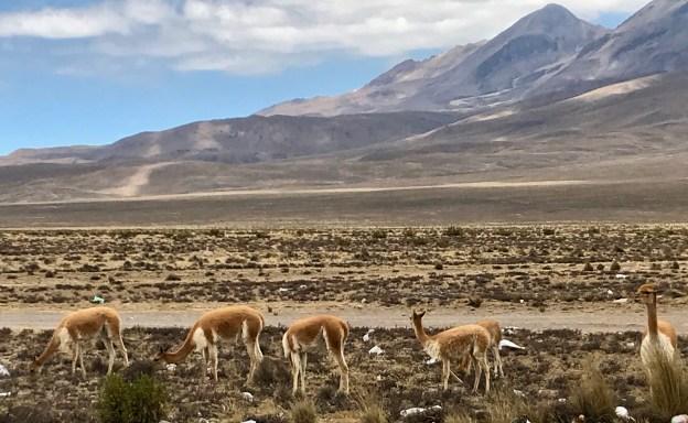 fullsizeoutput_1293 Peru Explorations: Arequipa Arequipa Peru