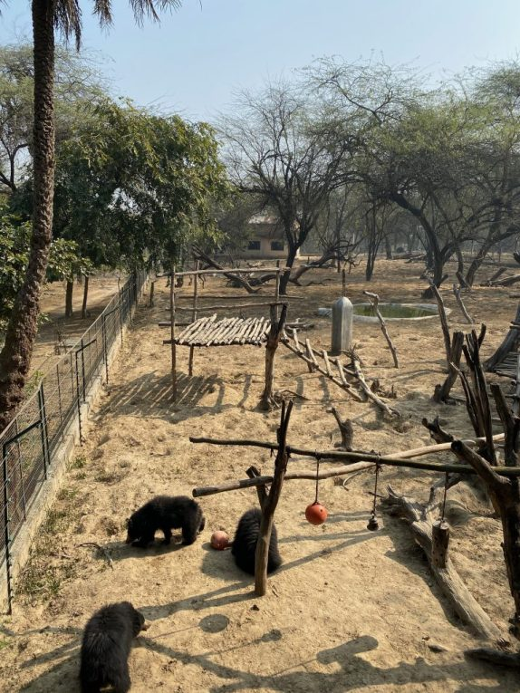 2004-Weasleys-Enclosure-768x1024 Guest Post: The Sloth Bears of India's Wildlife SOS India