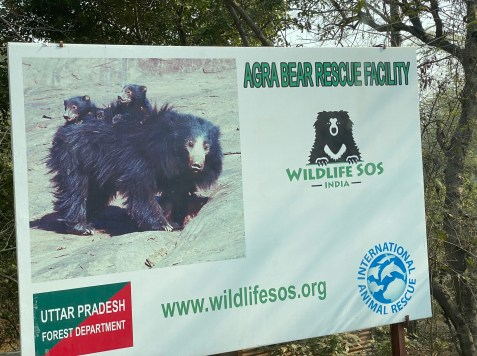 Agra-Bear-Rescue-Sign-1024x765 Guest Post: The Sloth Bears of India's Wildlife SOS India