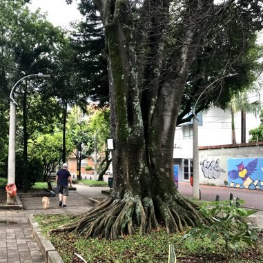 IMG_3846-1-scaled Walking in Medellín: Our Salvation in a Quarantine Colombia