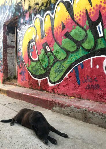 IMG_1357-scaled Cartagena Street Art Walking Tour Colombia