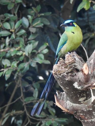 DSCN2358 Backyard Birds! Colombia The Great Outdoors