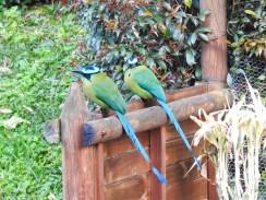 DSCN2369 Backyard Birds! Colombia The Great Outdoors