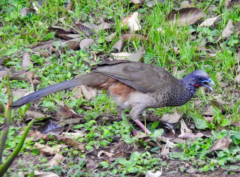 DSCN2381-1024x756 Backyard Birds! Colombia The Great Outdoors
