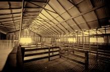 The old shearing shed, Yanga homestead