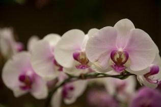 Orchid, Hong Kong Botanical Gardens