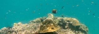 mergui_snorkel_trip-11