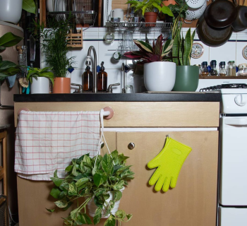 Plants Make People Happy (Especially in a Pandemic)