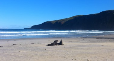 Península de Otago. Sandfly Bay