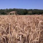 Camino del Último Cátaro – Et 3.: La Seu d'Urgell – Castellbò