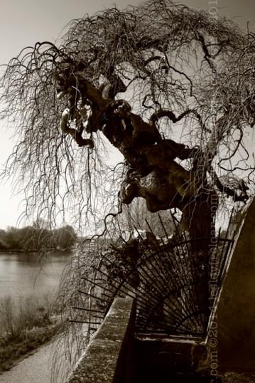 la Loire and some crazy trees