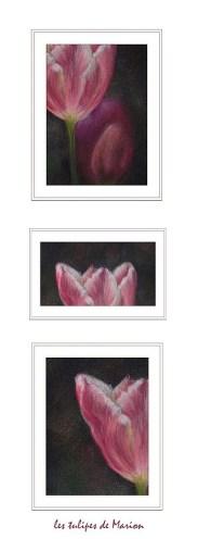 triptyque tulipes pastels secs