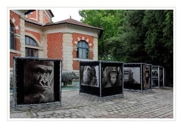 expo au muséum d'histoire naturelle