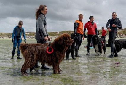 sauvetage en mer , fête de la mer à Guissény juillet 2013, SNSM, chiens terre neuve,