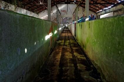 couloir soues abattoir à cochons