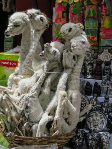 βαλσαμωμένα μωρά Llama