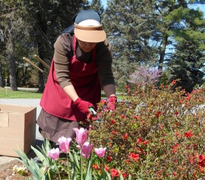 cropped-gardening1.jpg
