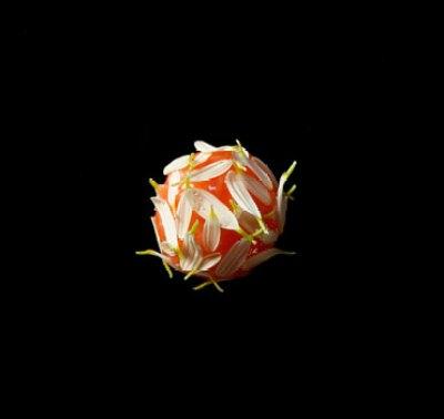 sepia-saikou-salmon-roe-sudachi-chrsanthemum-petal370