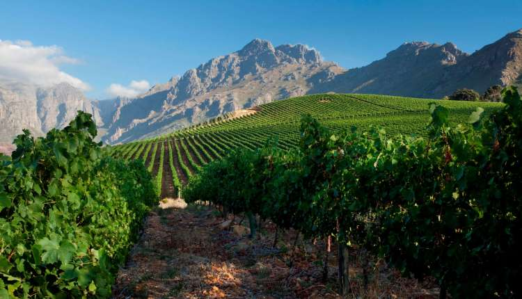 Stellenbosch: South Africa's leading wine region