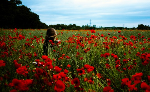 child in a field of red flowers