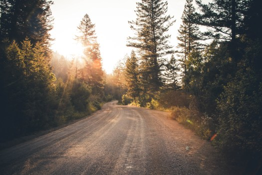 gravel road through the forest with the sun shining through the trees.