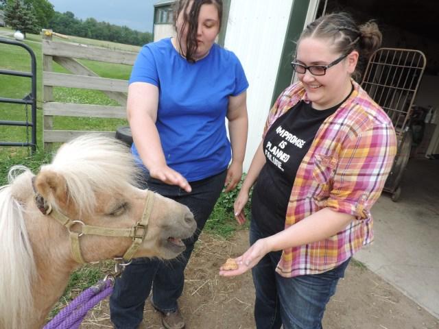 feeding mini horse