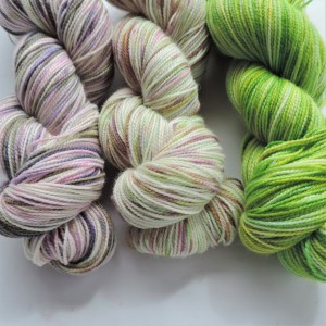 AYT004 Ranunculus Gradient Adventure