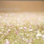 When Infertility Steals Your Joy- A Message of Hope & Encouragement