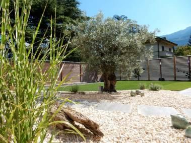 Un bel olivier au coeur du jardin